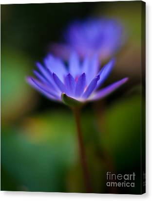 Lily Glow Canvas Print by Mike Reid