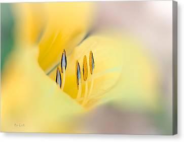 Lily Impressions Canvas Print