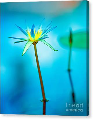 Lily In Blue Canvas Print by Bill  Robinson