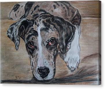 Lily Canvas Print by Joan Pye