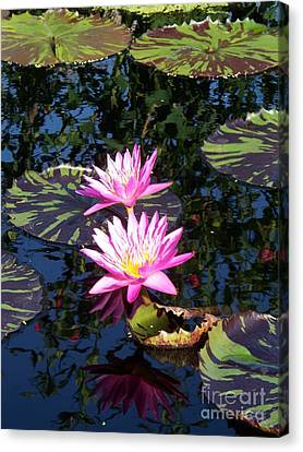 Lily Monet Canvas Print by Eric  Schiabor