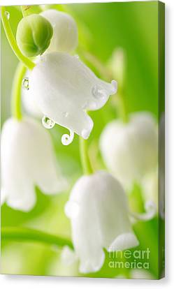 Lily Of The Valley Canvas Print by Boon Mee