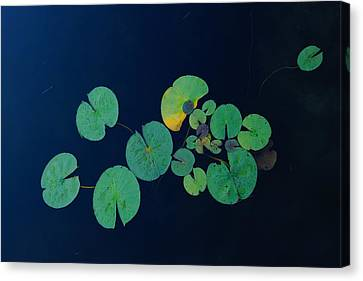 Lily Pad 2 Canvas Print by Steven Clipperton