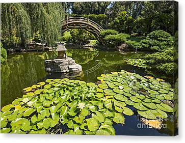 Lily Pad Garden - Japanese Garden At The Huntington Library. Canvas Print by Jamie Pham