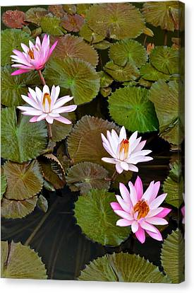 Lily Pad Haven Canvas Print by Frozen in Time Fine Art Photography