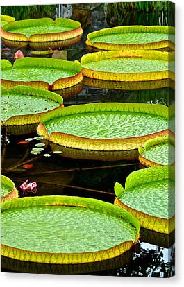 Lily Pad Pond Canvas Print by Frozen in Time Fine Art Photography