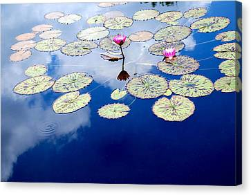 Lily Pads -  A Floating World Canvas Print