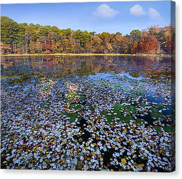 Lily Pads And Autumn Leaves Canvas Print by Tim Fitzharris