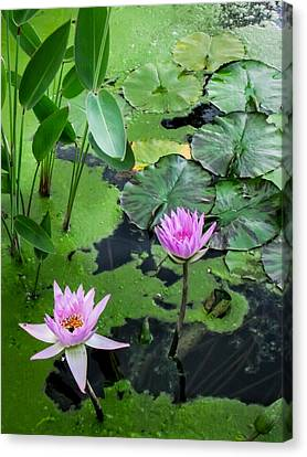 Canvas Print featuring the photograph Lily Pads And Flowers by Dawn Romine