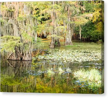 Lily Pads And Reflections Canvas Print by Geoff Mckay