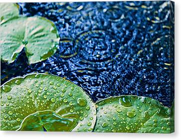 Lily Pads Canvas Print by Debi Bishop