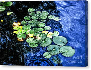 Lotus Leaves Canvas Print - Lily Pads by Elena Elisseeva