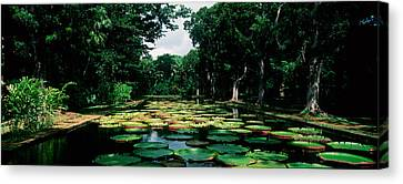 Lily Pads Floating On Water Canvas Print by Panoramic Images
