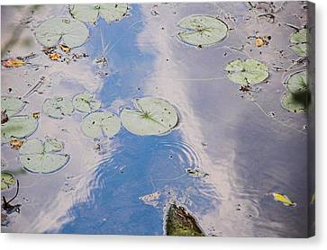 Lily Pads Canvas Print by Gary Marx