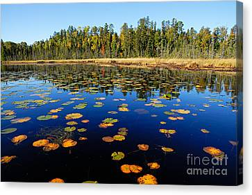 Lily Pads In Autumn Canvas Print by Larry Ricker