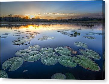 Lily Pads In The Glades Canvas Print by Debra and Dave Vanderlaan