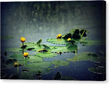 Lily Pads In The Rain At Vernonia Lake Canvas Print by Dawna Morton