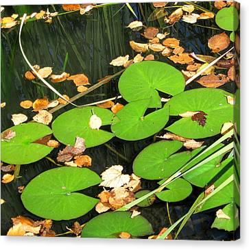 Lily Pads Canvas Print by Mary Bedy