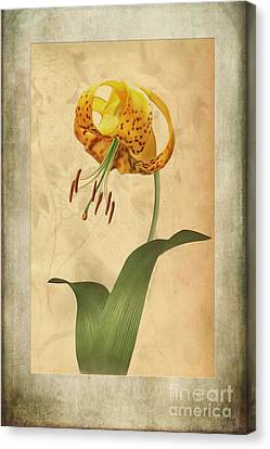 Lily Painting With Textures Canvas Print