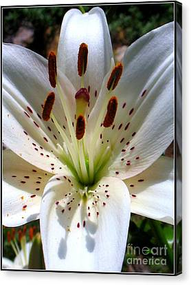 Lily Canvas Print by Patti Whitten
