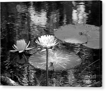 Lily Pond 2 Canvas Print by Anita Lewis