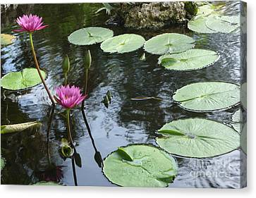 Abstracted Water Nymph Canvas Print - Lily Pond by Irina Davis