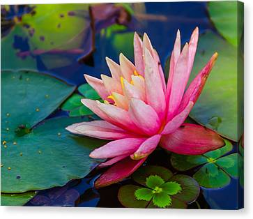 Lily Pond Canvas Print by John Johnson