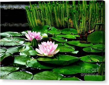 Canvas Print featuring the photograph Lily Pond by John S