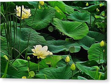 Lily Pond Canvas Print by Julie Grace
