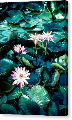 Canvas Print featuring the photograph Lily by Randy Sylvia
