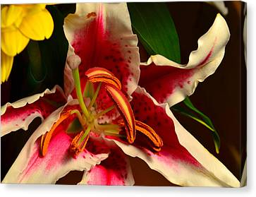 Lily Rose Flower 2 Canvas Print