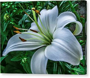 Canvas Print featuring the photograph Lily by Skip Tribby