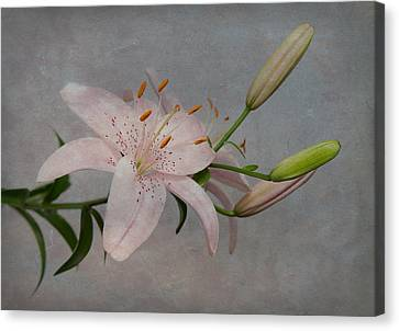Canvas Print featuring the photograph Pink Lily With Texture by Patti Deters