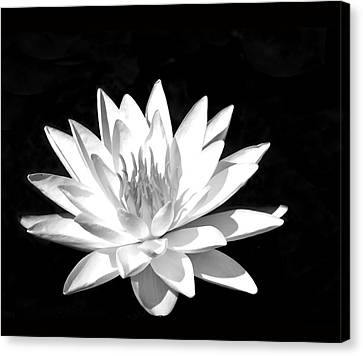 Lily#2 Canvas Print by Joe Bledsoe