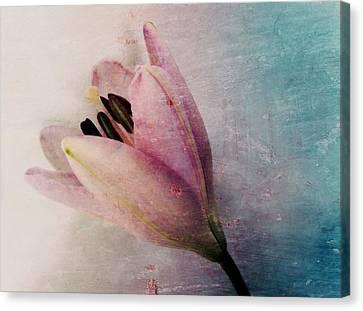 Lily's Dream Canvas Print