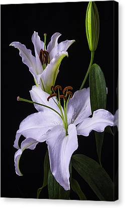 Lily's In Bloom Canvas Print
