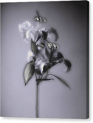 Canvas Print featuring the photograph Lily_variation#5 by Richard Wiggins