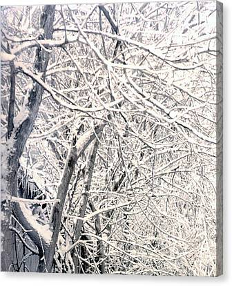 Limbs Covered With Snow Canvas Print