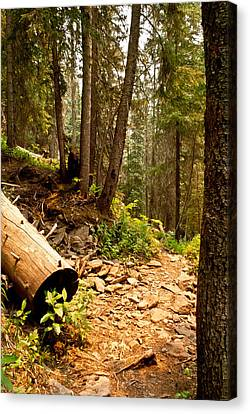 Lime Creek Trail Canvas Print by Jessica Tookey