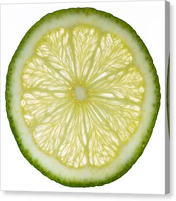 Lime Slice Canvas Print