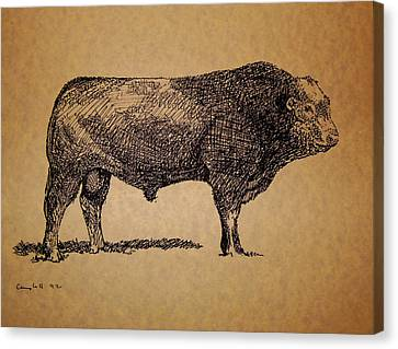 Canvas Print featuring the drawing French Limousine Bull by Larry Campbell