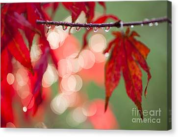 Line Of Reflections Canvas Print by Anne Gilbert