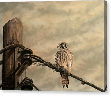 Line Of Sight Canvas Print by James Willoughby III