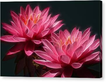 Lined Pink Water Lilies Canvas Print by Linda Phelps