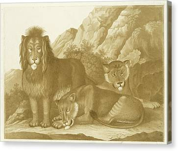 Lion And Two Lionesses, Isaac Van Haastert Canvas Print by Isaac Van Haastert