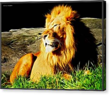 Lion Around Canvas Print