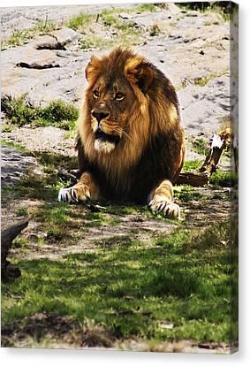 Lion At Rest Canvas Print by B Wayne Mullins