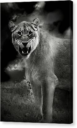 Lion Canvas Print by Christine Sponchia