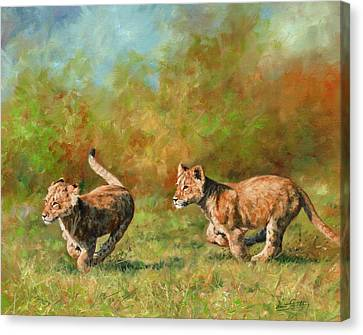 Lion Cubs Running Canvas Print by David Stribbling