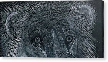 Lion Eyes  African King Detail Canvas Print